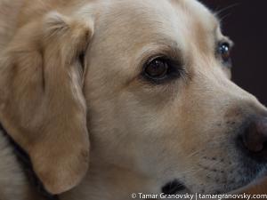 Rache's Dog, Diego