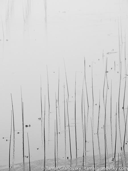 Bamboo Poles. Near Sanshazhen, Fujian, China
