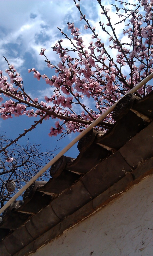 Dali, Apricot Tree in Bloom
