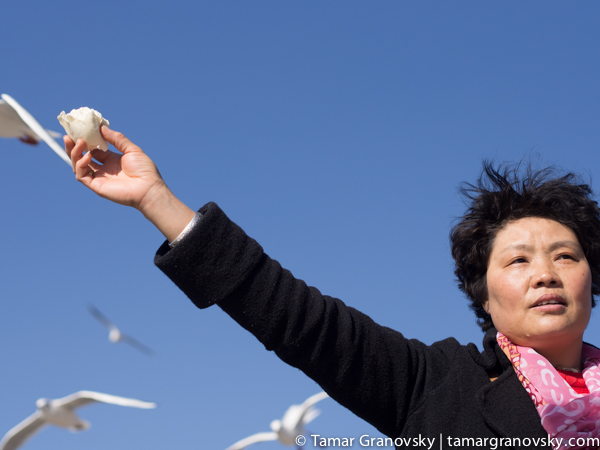 Feeding Seagulls from Russia During Migratory Season, Kunming
