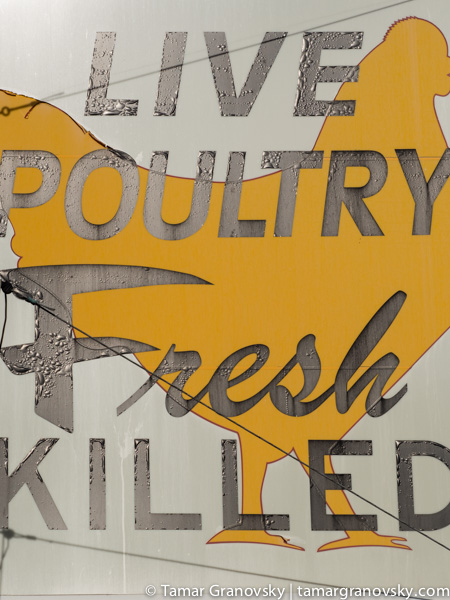 Live Poultry Fresh Killed, Cambridge, MA, U.S.