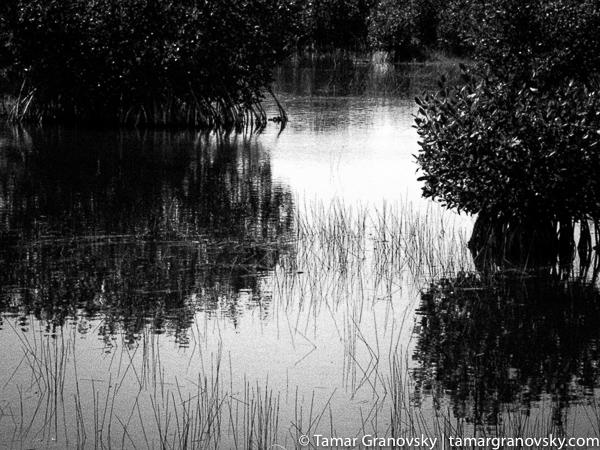 Big Cypress Preserve, Florida, U.S.